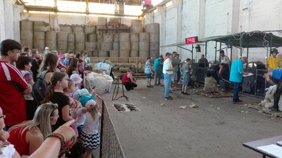 Mistrovství české republiky ve stříhání ovcí plakát akce zde ab2a9eeea97